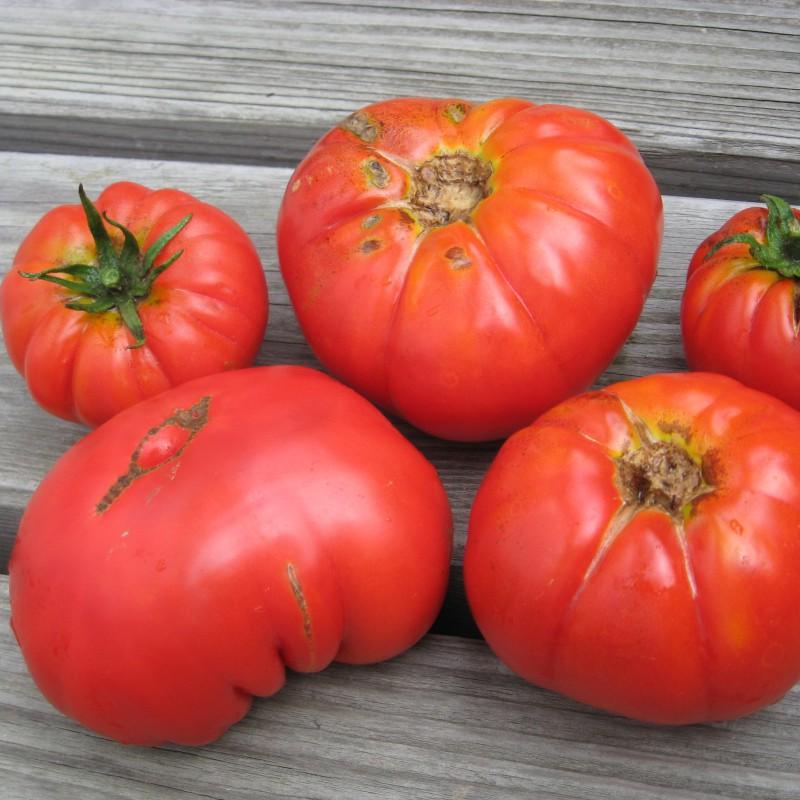fleischtomate marmande de pays tomaten. Black Bedroom Furniture Sets. Home Design Ideas