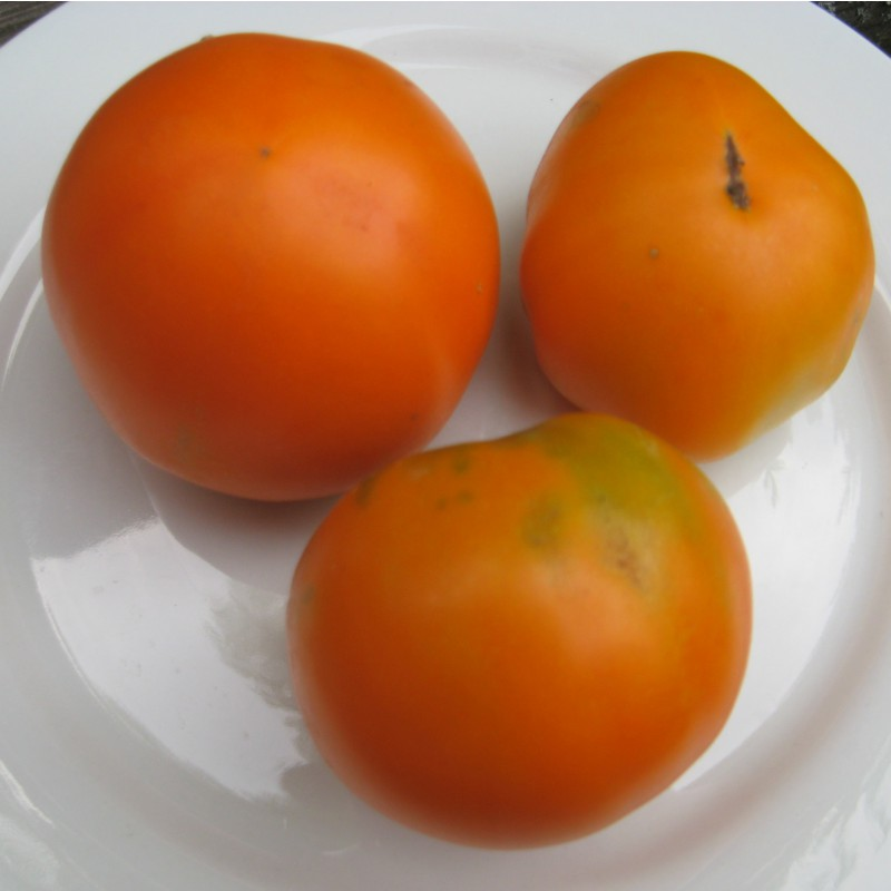 tomate orange favourite tomaten. Black Bedroom Furniture Sets. Home Design Ideas