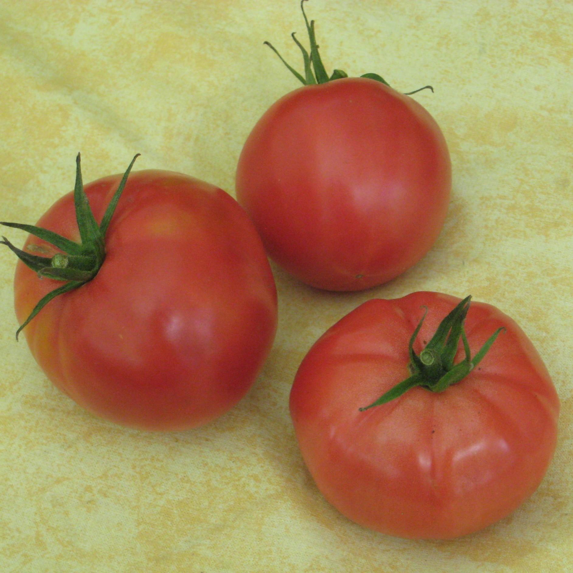 fleischtomate berner rose fleischtomaten tomaten. Black Bedroom Furniture Sets. Home Design Ideas