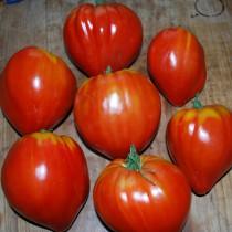 Fleischtomate - Ochsenherz Rot