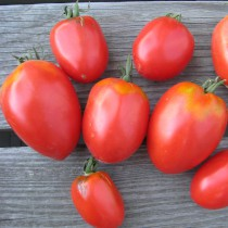 Tomate - Amish Pasta