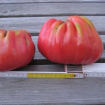 Fleischtomate - Ancienne Provence