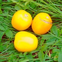 Tomate - Cerise gelb