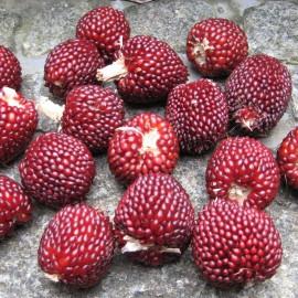 Popcornmais - Erdbeermais