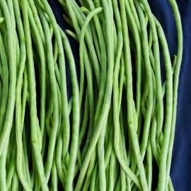 Stangenbohne - Spaghettibohne Costo longo