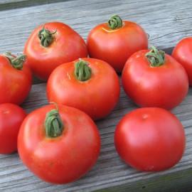 Tomate - Matina