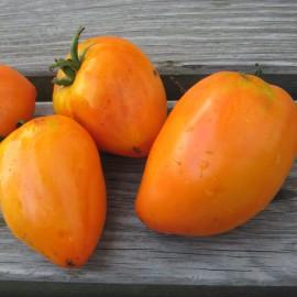 Fleischtomate - Ochsenherz Orange