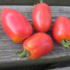 Tomate - Rote Zora