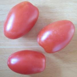 Tomate - Russische Wintertomate
