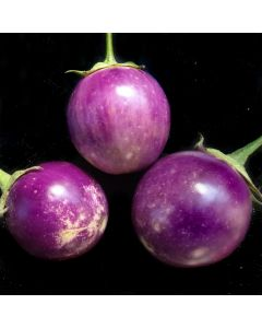 Aubergine, rund - Lao Lavender