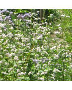 Bienen- und Insektenweide