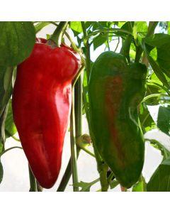 Paprika, spitz - Dulce de Espana