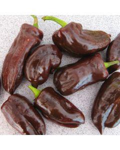 Paprika, Block - Sweet Chocolate