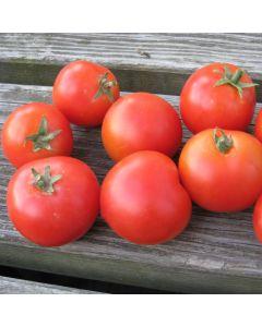 Tomate (Busch) - Balkonstar