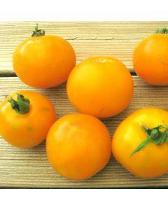Tomate - Goldene Königin