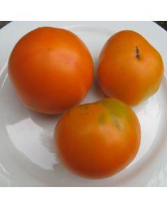 Tomate - Orange Favourite