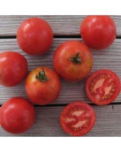 Tomate - Rheinlands Ruhm