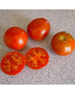 Tomate - Stupice