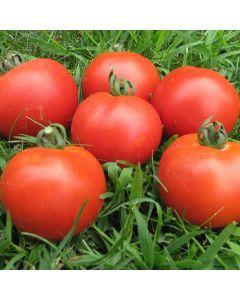 Tomate - Veni Vidi Vici