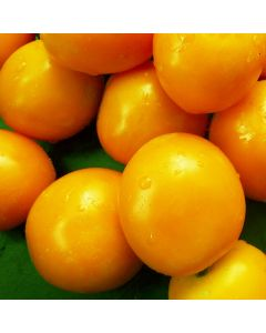 Tomate - Sundrop